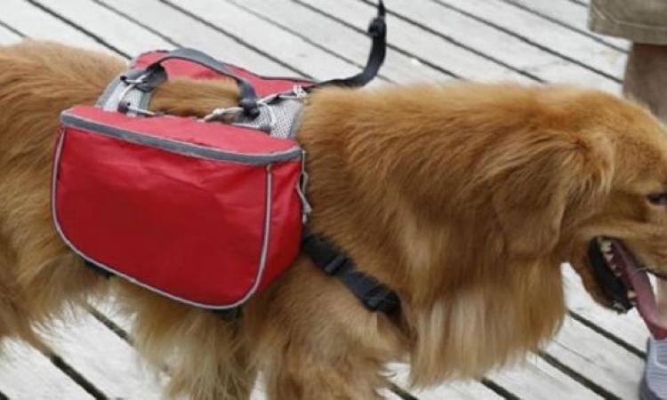 سروج ذكية لتدريب الكلاب وتعليمها الحيل