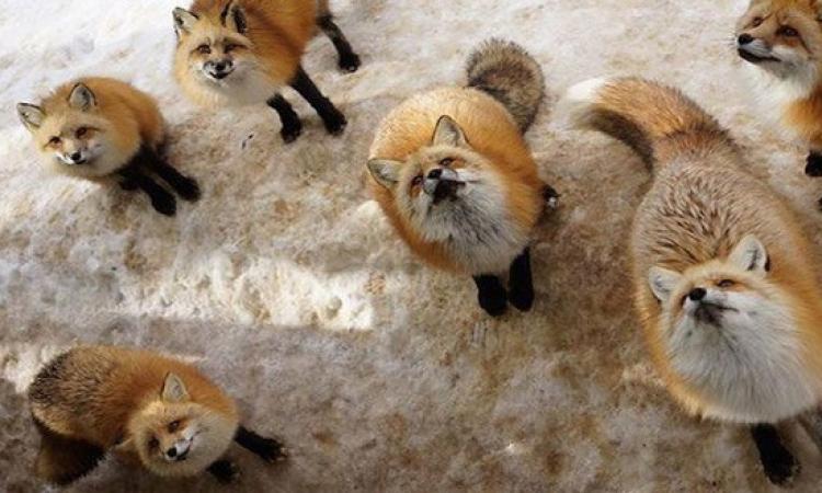 الحيوانات تسيطر على 11 مكانا بالعالم