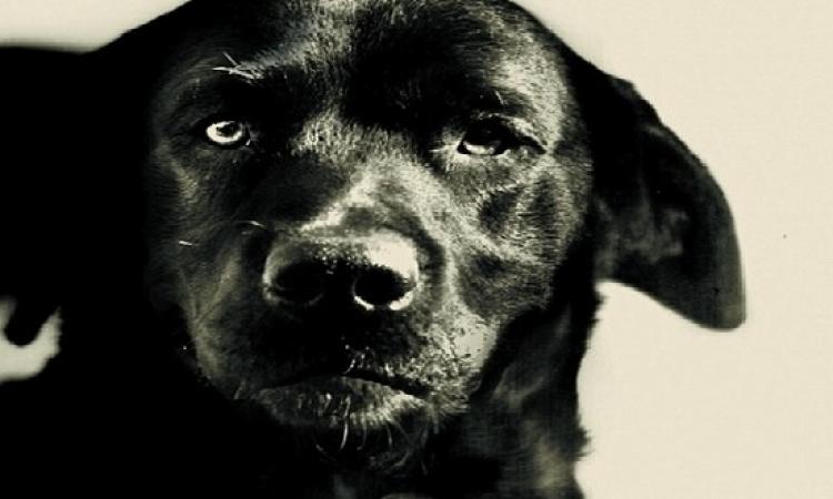 قصة كلب برىء حكم عليه بالسجن مدى الحياة