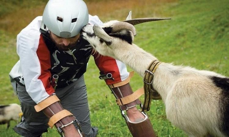 بالصور.. رجل يتخلى عن حياته ليعيش مع الماعز