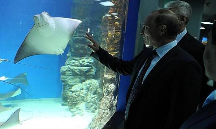 بالصور .. جولة فى مركز البيئة المائية بروسيا .. زى جنينة الأسماك عندنا بالضبط!!