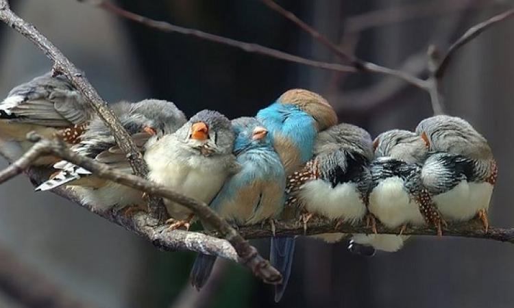 بالصور .. ابتسم مع تجمعات الطيور وهما جنب بعض .. أسرة مع بعضينا!!