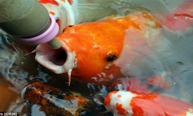منتزة صينى يسمح لزواره بإرضاع الأسماك !!