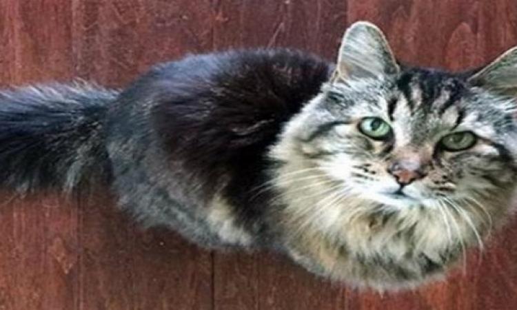 جينس تسجل رقم جديد لأكبر قط  معمر بالعالم