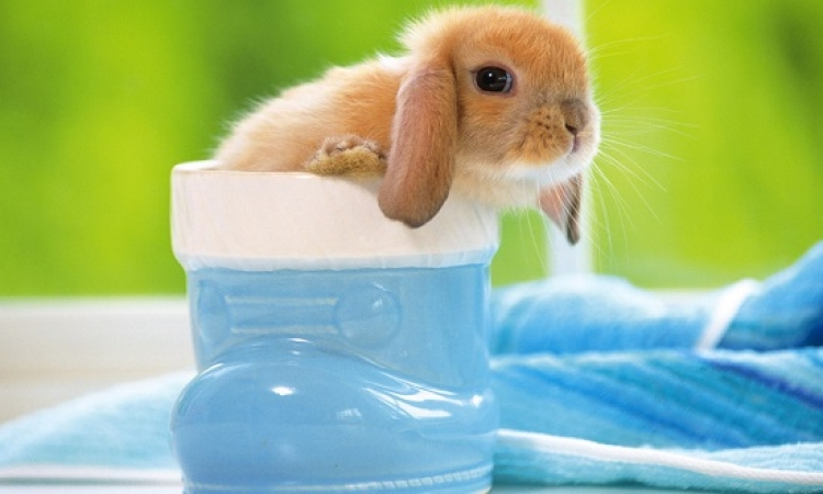 صور طريفة للـ Mini أرانب فى الاحتفال بيومها العالمى .. ده ايه الاحجام دى !!