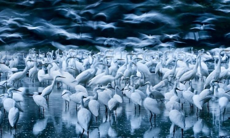 شاهد الـ 10 صور الفائزة بجائزة الحياة البرية لعام 2015 من بين 42 ألف صورة!!