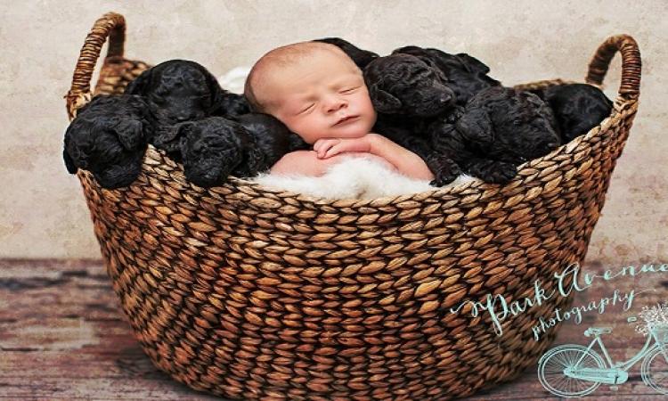 صور عائلية لرضيع وكلابه التسعة .. اتولدوا كلهم فى نفس اليوم .. أسرة مع بعضيهم !!
