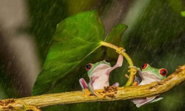 بالصور.. تعايش الحيوانات مع الطبيعة