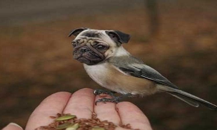 بالصور .. إبداع الفوتوشوب فى مزج صور الحيوانات والطيور .. ياماما !!