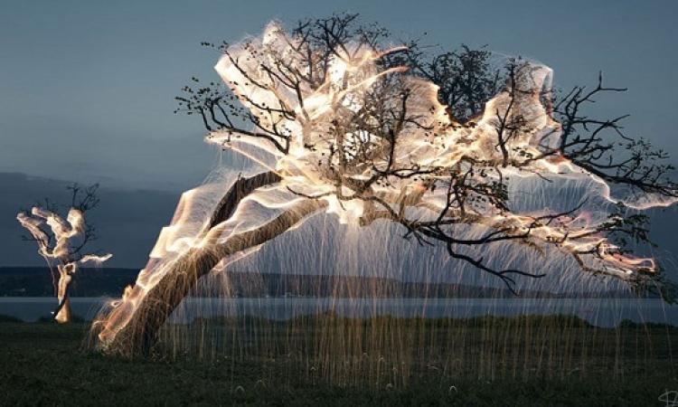 بالصور .. الاشجار المضيئة .. فكرة مذهلة لبرازيلى موهوب .. اهى تنفع لما النور يقطع !!
