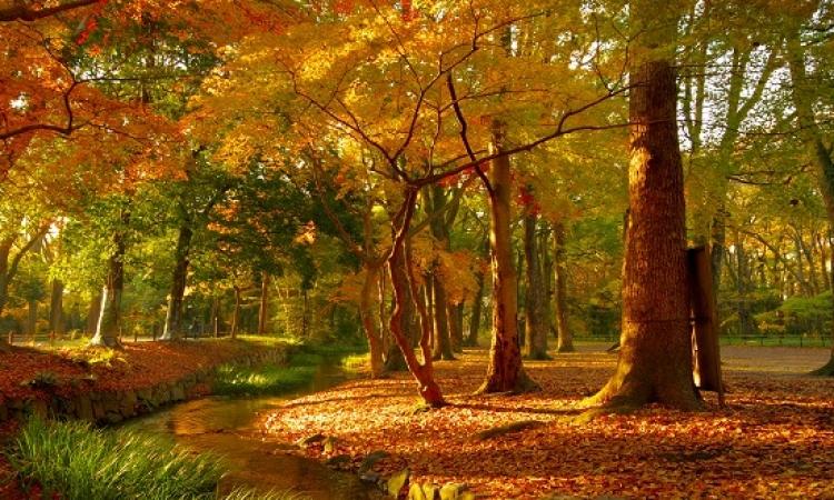 جمال غابات التشيك .. فى آخر أيام الخريف