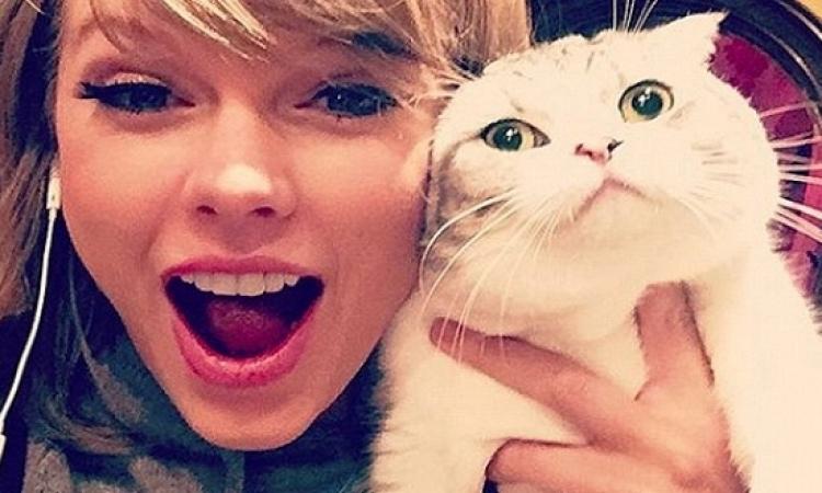 ملكة القطط تتغلب على بطلة الإثارة على الانستجرام