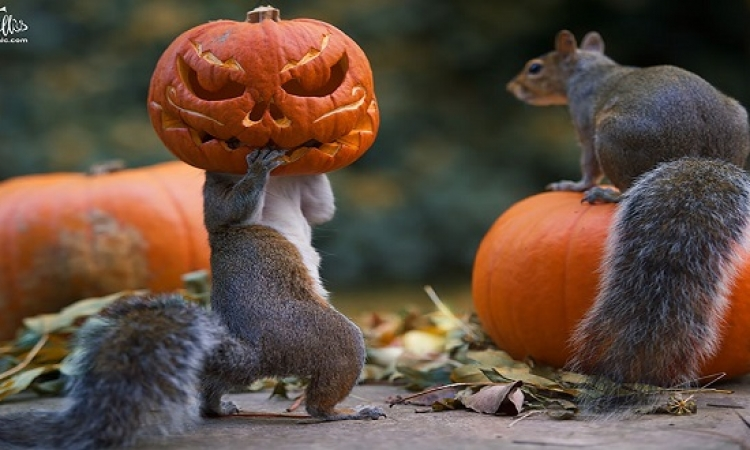 بالصور .. الحيوانات تودع الخريف وتحتفل بالهالوين