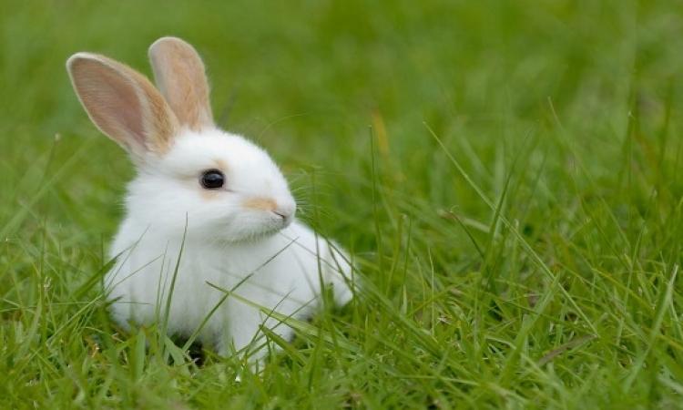 بالصور .. تمثال جديد لأرنب عملاق يأكل إنسانا فى التشيك !!