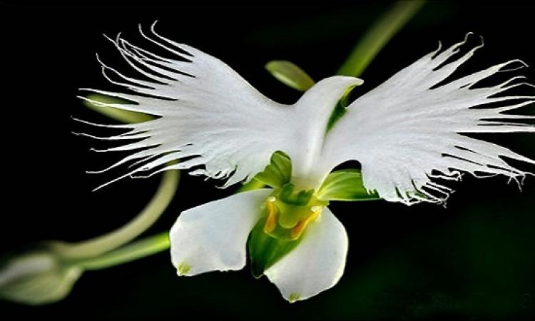 بالصور .. طيور وجمجمة وملاك .. اشكال غريبة للورود .. سبحان الله !!