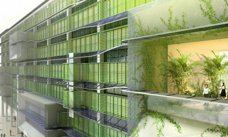 إمكانية توليد الكهرباء من الطحالب