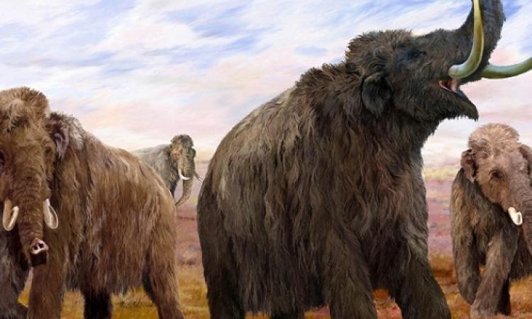ماهو سبب انقراض الماموث
