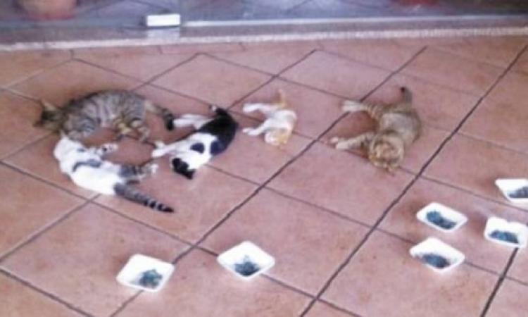 إدارة الأهلى تقاضى المسئولين فى حادث قتل القطط