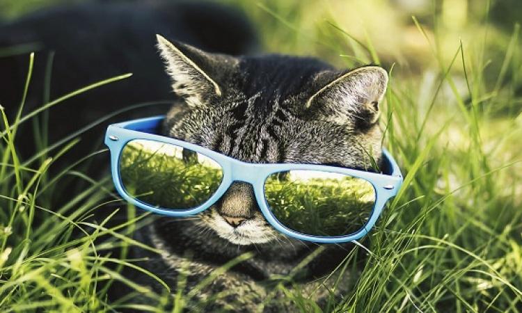 صور مدهشة للقطط بعدسة عاشق القطط : يا بختهم بيه !!
