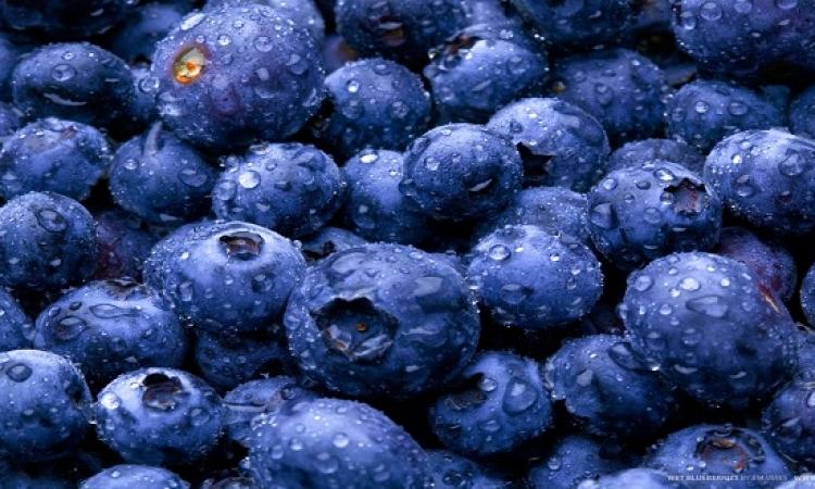 تناول التوت الأزرق يومياً يحمى من الزهايمر والخرف