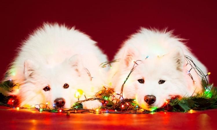 بالصور .. تزيين الكلاب فى عيد الميلاد : ستكونين أنت الشجرة !!