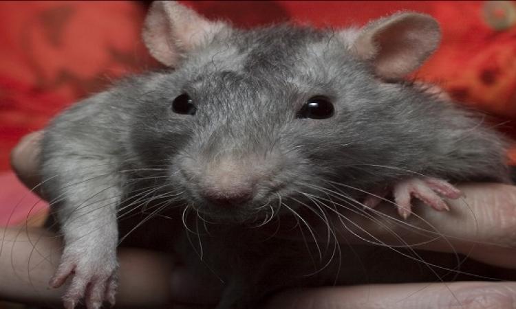للأطفال .. قصة الفأر ومخزن الفلاح .. الطمع يقل ما جمع!!