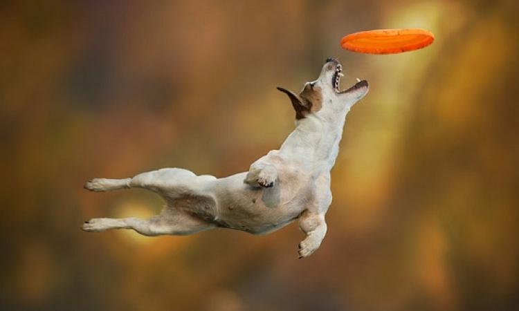بالصور .. كلاب بتطير من غير جناحات !!