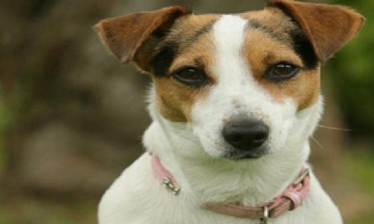 بالفيديو .. كلب محظوظ ينجو من الموت بأعجوبة بسباق للسيارات