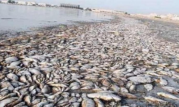 انتشال 46 طن أسماك نافقة بمياه النيل وتشكيل لجنة لمنع تسربها للأسواق