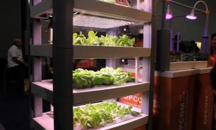 بنظام المربعات .. زراعة الخضراوات بالهواتف الذكية !!