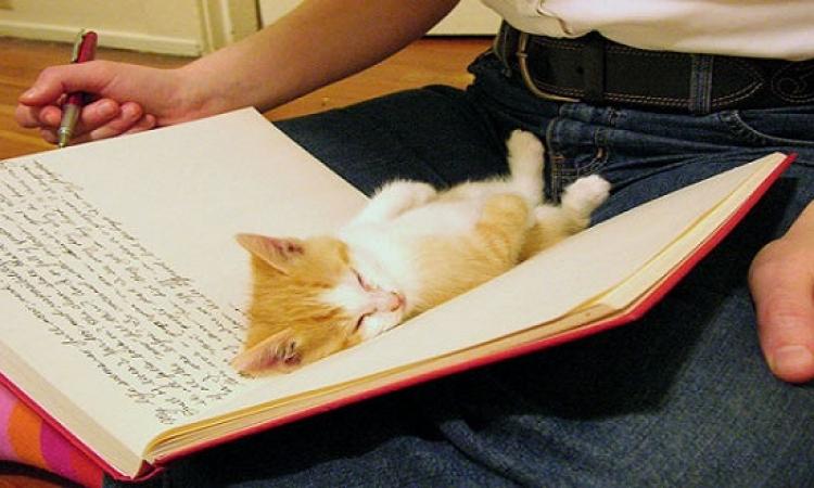 بالصور .. حيوانات بتنام فى حتت غريبة .. صحيح النوم سلطان !!