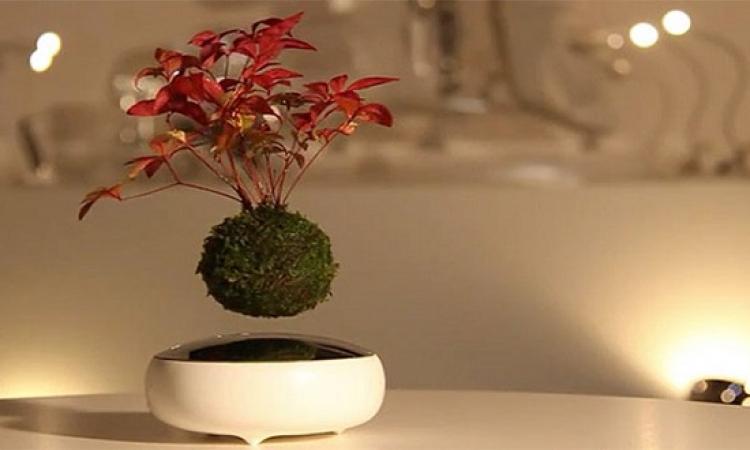 بالصور والفيديو .. زهور طائرة فى كوكب اليابان لتزيين المنزل !!