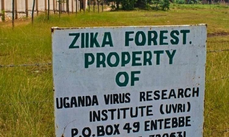 فيروس زيكا .. مصدره أوغندا وضحاياه بأمريكا اللاتينية