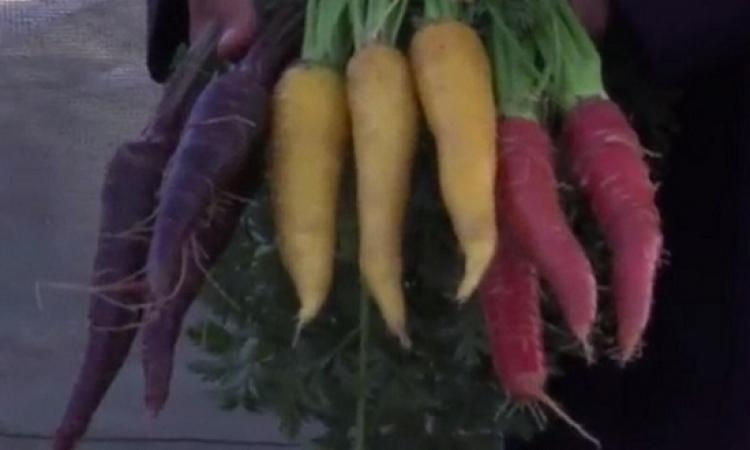 كويتى ينتج فواكه وخضراوات نادرة بألوان غريبة