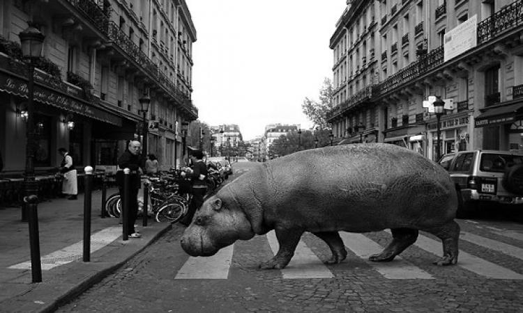 بالصور .. الحيوانات تجتاح شوارع لندن وباريس .. إزاى كده ؟!
