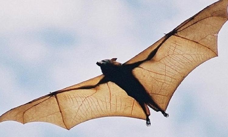 هجوم الخفافيش يُجبر مستشفى أمريكية على الإغلاق