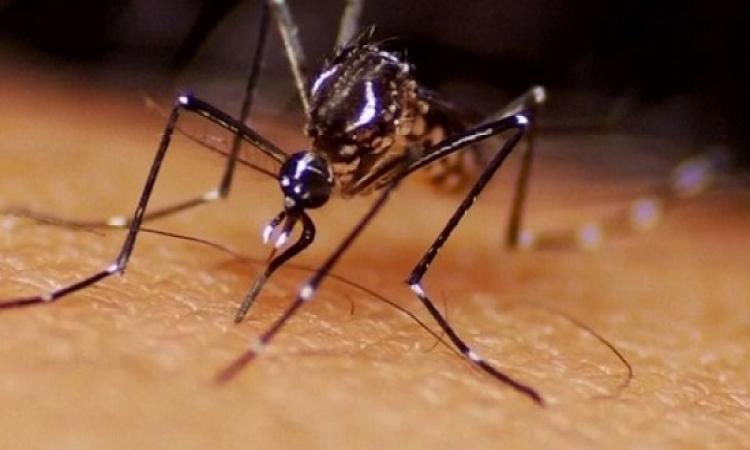 """اكتشاف خامس إصابة بفيروس """"زيكا"""" فى اليابان"""