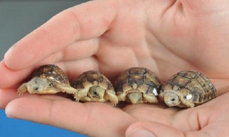 محكمة تمنع كنديا من اقتناء السلاحف لمدة 10 سنوات