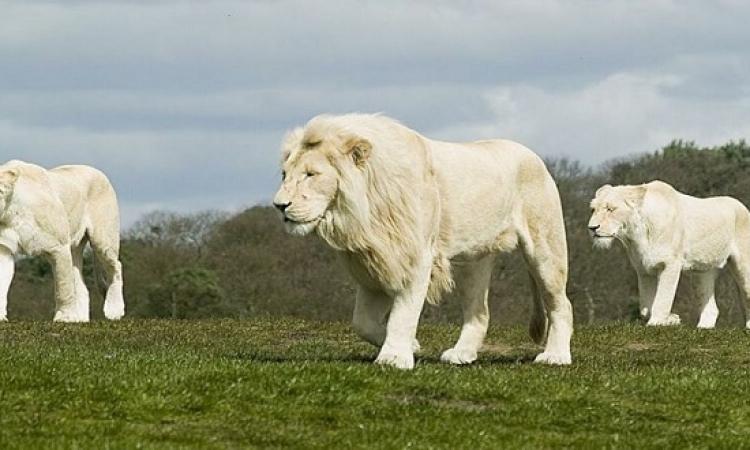تعرف على الأبراج الأكثر غروراً : ملك وجماد واربع حيوانات ؟!