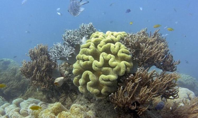 ظاهرة النينو تهدد الحاجز المرجانى العظيم