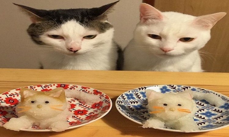 رد فعل القطط على أنواع الطعام : اكيلة ومزاجها عالى !!