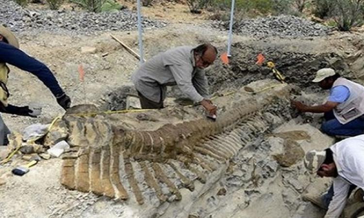 العثور على ديناصور يرجع إلى 90 مليون سنة بأوزبكستان