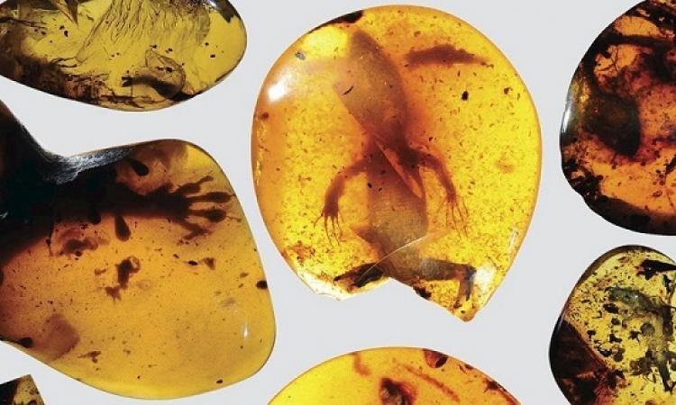 سحلية عمرها 99 مليون عام تكشف عن نظام بيئى مفقود