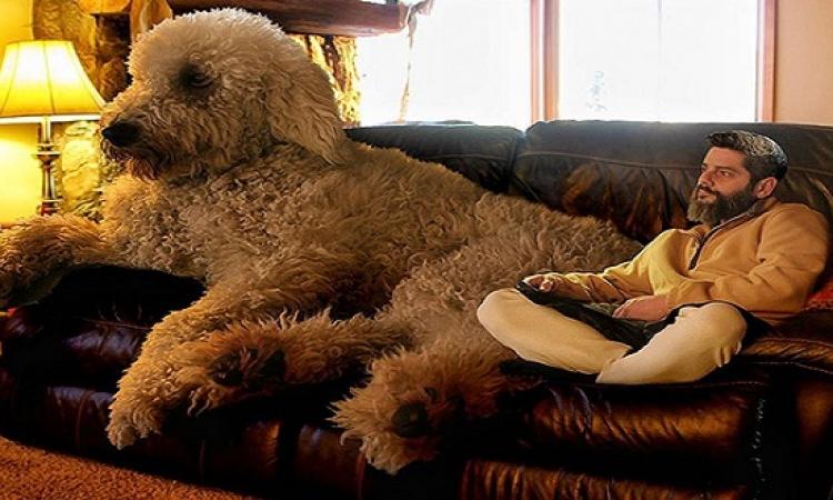 صور مذهلة للكلب جوبى وصاحبه .. يعنى المفروض إن ده كلب ؟!