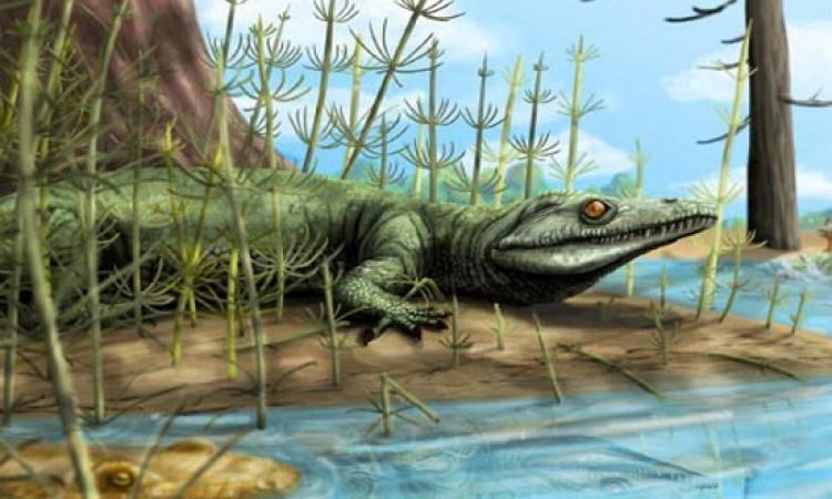 اكتشاف بقايا كائن زاحف عمرها 250 مليون عام بالبرازيل