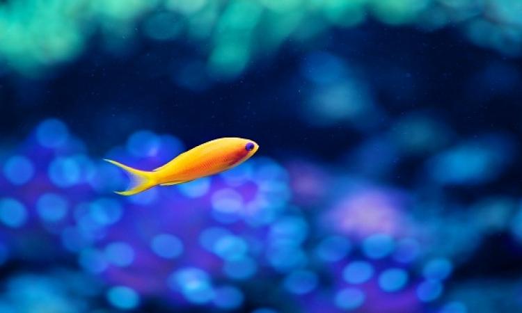 قصة للأطفال .. مغامرة السمكة الصغيرة والبحر الكبير