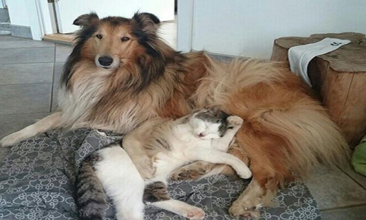 بالصور .. صداقة غريبة بين قط وكلبة .. من النظرة الأولى !!