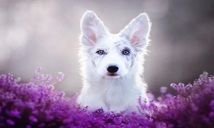 أروع صور لأجمل كلاب بعدسة بولندية .. فنانة مفيش كلام !!