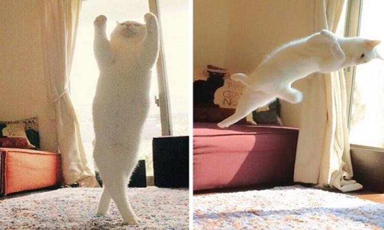 بالصور .. قطة بترقص بالية ولا نيللى كريم !!