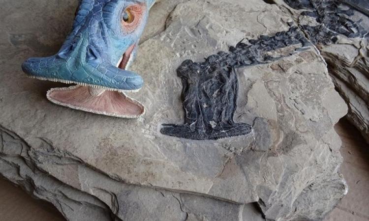 اكتشاف كائن غريب برأس مطرقة عمره 242 مليون سنة